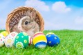 Easter Bunny is Explained by Going Back to his Pagan Roots